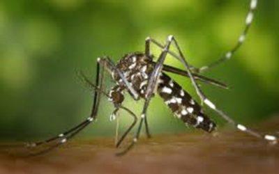 Le Moustique vecteur de Maladies 2