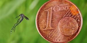 moustique-tigre-taille-