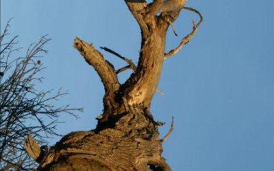 La seconde vie de l'arbre mort 1
