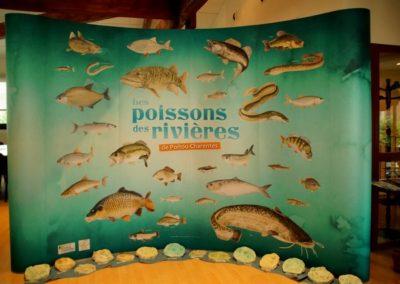Les poissons des rivières juin 2016