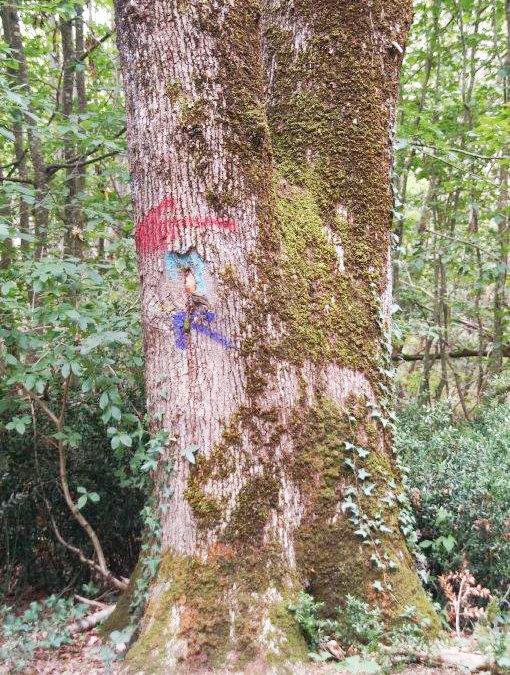 Stop aux balisages sauvages dans les bois !