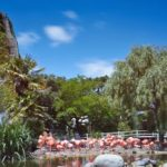 Une sortie en famille au zoo de La Palmyre ?