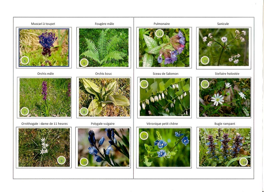 fleurs sauvages rando 001