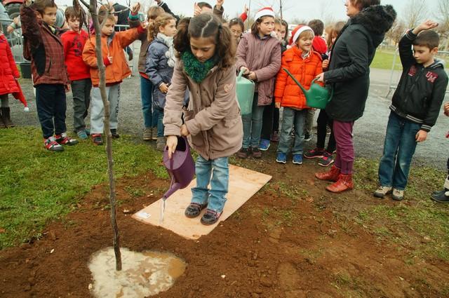 un arbre pour la planète décembre 2015 (16).JPG
