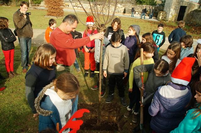 un arbre pour la planète déc 2015 Crazannes (3).JPG