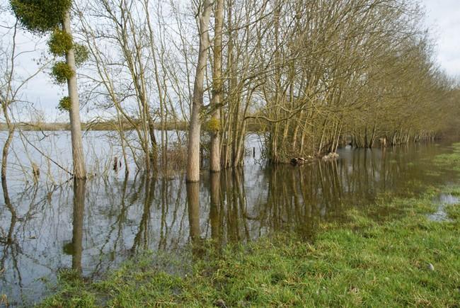 Charente déborde janvier 2013 (3).JPG