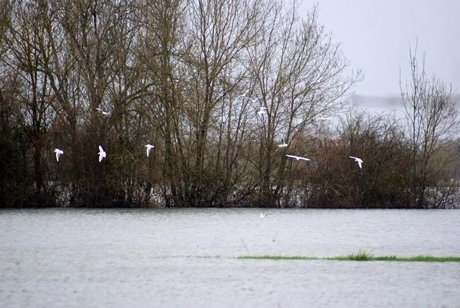 Charente déborde janvier 2013 (13).jpg