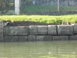 opération nettoyage des quais nov 2015 (15).JPG