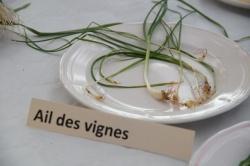 10 février 2018 conférence la cuisine des plantes sauvages (11).JPG