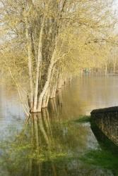 Charente déborde janvier 2013 (11).JPG
