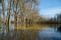 Charente fév 2014  (13).JPG